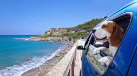 Pooches are a definitive excursion sidekick. Here's the means by which to design an excursion with yours.