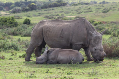 Skirt the enormous parks: This is the best spot to go on a South African safari