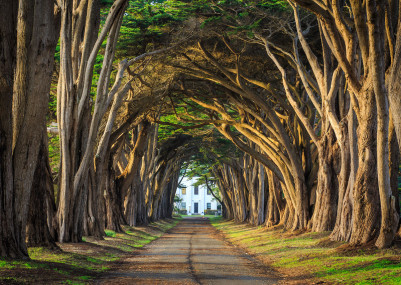 The 7 coolest tree burrows the world over